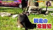 Youtubeバラエティ動画格納庫 更新 -  世界まる見え!テレビ特捜部    動画 9tsu  2021年3月22日