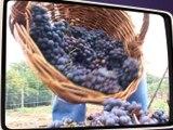 Le dernier vigneron de Saint-Rambert - Souvenirs souvenirs - TL7, Télévision loire 7