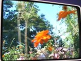 Couleurs fleurs à Essertines en Donzy - Souvenirs souvenirs - TL7, Télévision loire 7