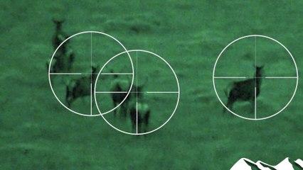 Deer Act shake-up horror for Scottish sporting estates
