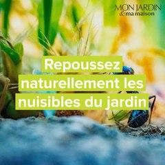 Repoussez naturellement les nuisibles du jardin