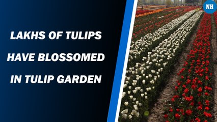 Ahead of Tulip Festival Asia's Largest Tulip Garden is opens for visitors