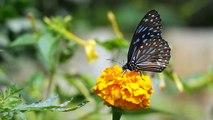 Butterfly ,  Beautiful butterfly