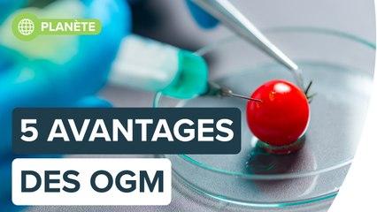 Les OGM sont-ils vraiment si mauvais ?   Futura