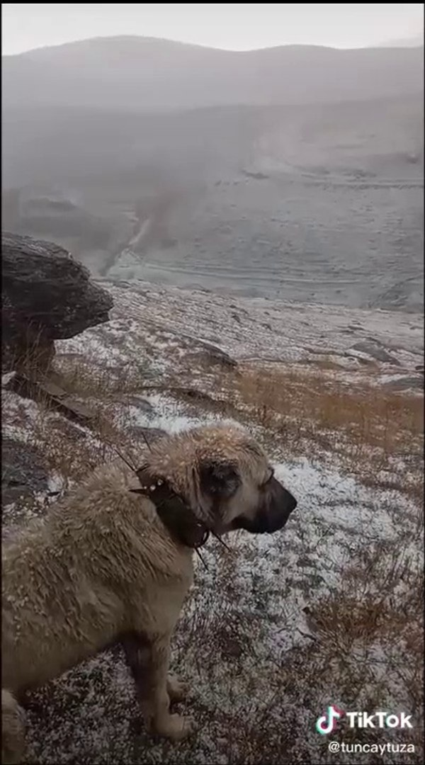 DAGLARDA YALNIZ KRAL KANGAL - ALONE KiNG KANGAL on the MOUNTAiN