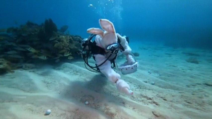 Insolite : une chasse aux œufs... sous la mer