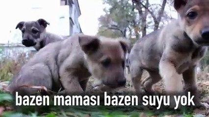 4 Nisan Dünya Sokak Hayvanları Günü:  Onlar soramıyorlarsa, biz onlar için sorarız!