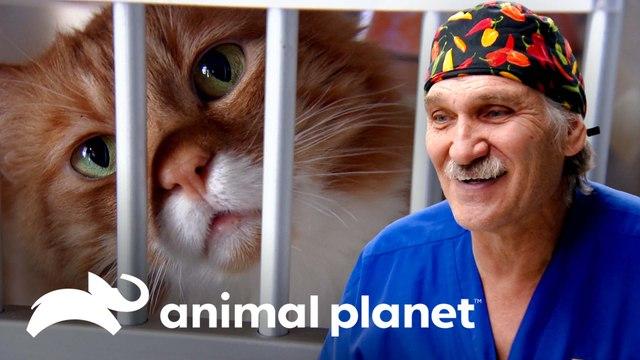Jóvenes aprenden cuidados veterinarios en jornada voluntaria   Dr. Jeff, Veterinario   Animal Planet