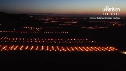 Bourgogne: des milliers de feux pour protéger les vignes du froid