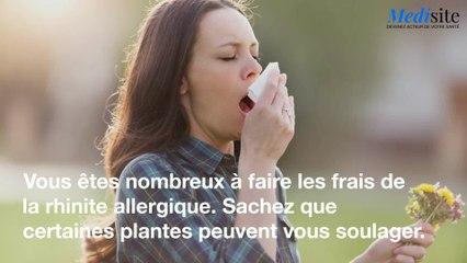 5 plantes pour combattre l'allergie au pollen