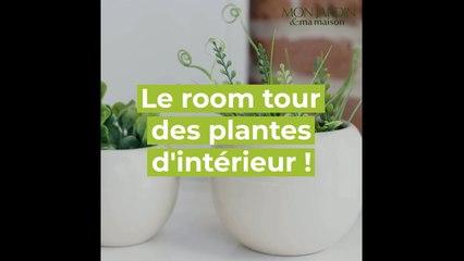 Choisir vos plantes d'intérieur