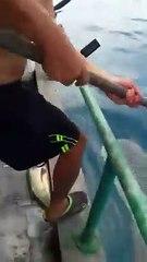 WATCH THIS! Shark thanks fishermen?