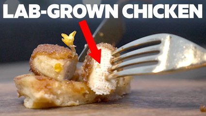 How one company is making real chicken from stem cells without killing any animals