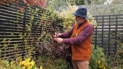 Quelles tailles effectuer au printemps ? Focus sur 3 plantes (Vidéo)