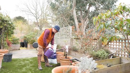 Comment planter un arbre fruitier en pot en 3 étapes ? (Vidéo)