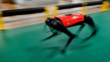 AlphaDog : intelligent et ultrarapide, ce chien-robot à 2 000 euros fait fureur en Chine