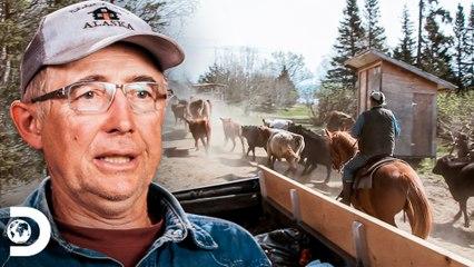 Família Kilcher se diverte ao guiar gados na fazenda   Alasca: A Última Fronteira   Discovery Brasil