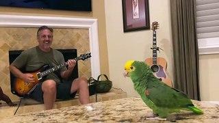 Bird sings AC/DC Whole Lotta Rosie