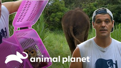 Grandes libertações de animais realizadas por Frank Cuesta | Wild Frank | Animal Planet Brasil