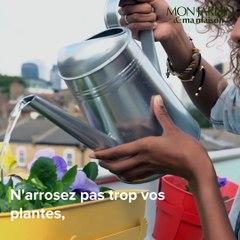 Comment se débarrasser des moucherons sur les plantes vertes ?