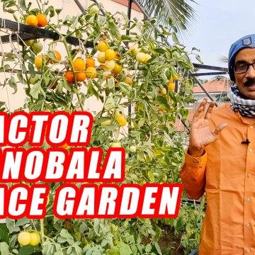 Actor Manobala-வின் அழகிய மாடித்தோட்டம்! _ Terrace Gardening