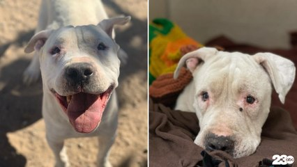 Dog rescue calling for answers after Cal City foster dog was beaten, stabbed