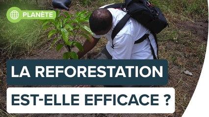 Contre le réchauffement, la reforestation est-elle une solution efficace ?   Futura