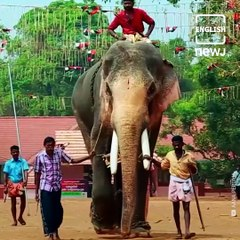 Meet 56-year-old Thechikottukavu Ramachandran, India's Tallest Elephant