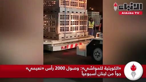 «الكويتية للمواشي» وصول 2000 رأس «نعيمي» جواً من لبنان أسبوعياً