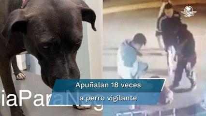 """Detienen a agresores de """"Negro"""", perrito vigilante apuñalado en Zumpango"""