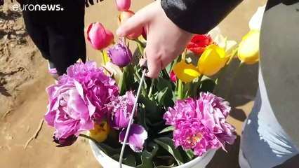 "Il giardino di tulipani ""take away"" alle porte di Milano"
