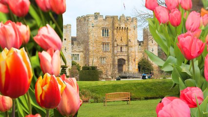 Tulips at Hever Castle