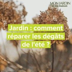 Jardin : comment réparer les dégâts de l'été ?