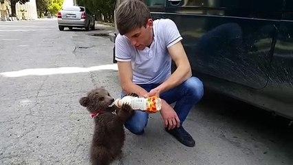 Adorable : cet homme donne du biberon à un petit ourson