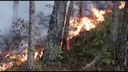 Extinguen fuego en Sierra de Bahoruco