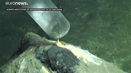 Inquinamento: veleni sotto il tappeto, anzi in mare