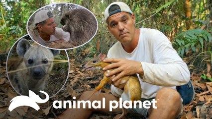 Frank se aproxima de 3 espécies tão simpáticas quanto perigosas | Wild Frank | Animal Planet Brasil