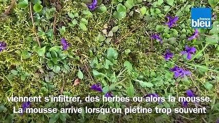 Roland Motte, jardinier:et si vous laissiez poussez les fleurs sauvages dans votre gazon?