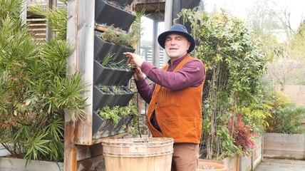 Comment aménager un mur végétal avec des plantes aromatiques ?