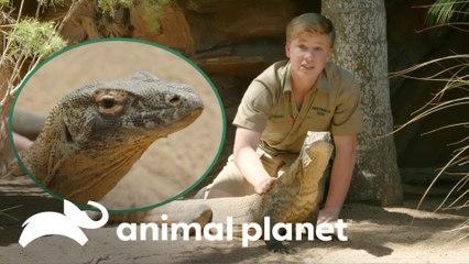 O animal favorito do Robert no zoológico | A Família Irwin: Robert ao resgate | Animal Planet Brasil