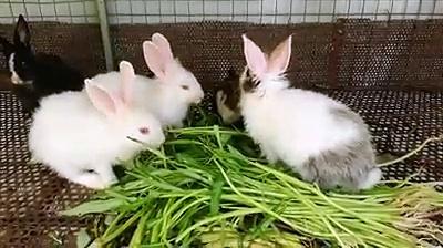 Rabbits  || Cute Rabbits Eating || So Many Rabbits Eating Together || Rabbits Videos