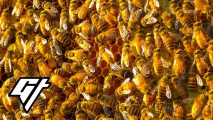 How a Beekeeper Harvests Honey in Urban Hong Kong