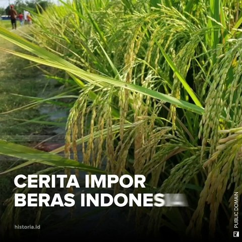 Cerita Impor Beras Indonesia | HISTORIA.ID