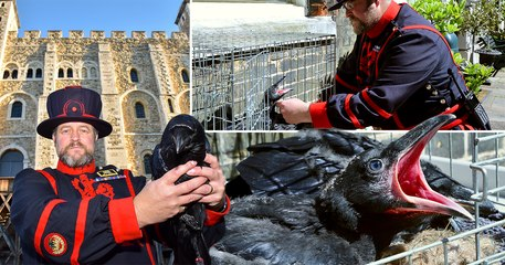 Queen's Chaplain Roger Hall joins Andrew Eborn to announce a special chance to name the baby Raven at The Tower of London