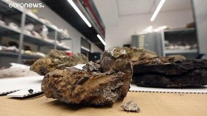 شرطة كرواتيا تعثر على مستحاثات عمرها 15 مليون سنة في صندوق سيارة
