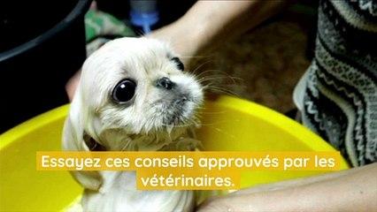 Tous les combien devez-vous laver votre chien ?