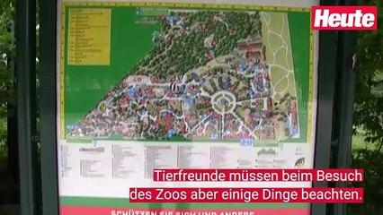 Tiergarten Schönbrunn öffnet wieder für Besucher