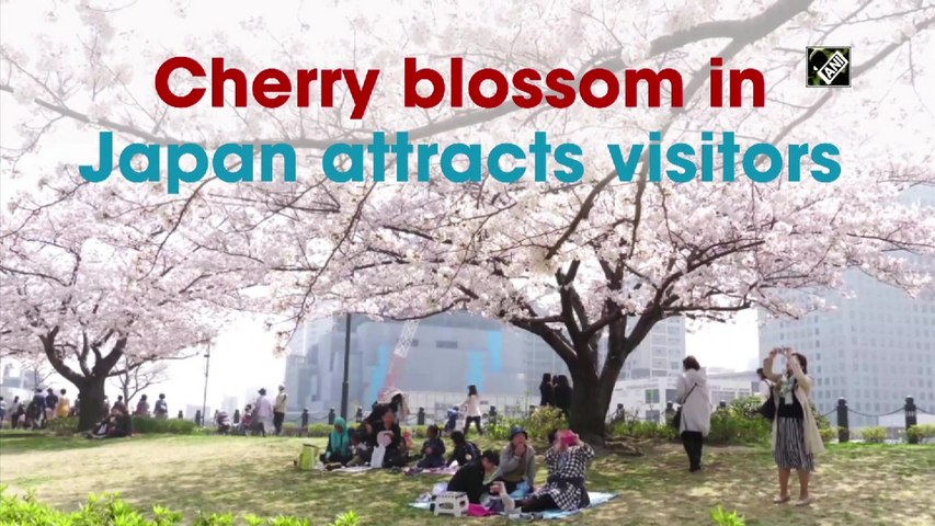 Cherry blossom in Japan attracts visitors