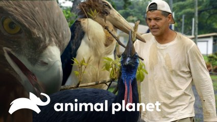 Frank se aproxima de três aves espetaculares | Wild Frank | Animal Planet Brasil