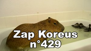Zap Koreus n°429